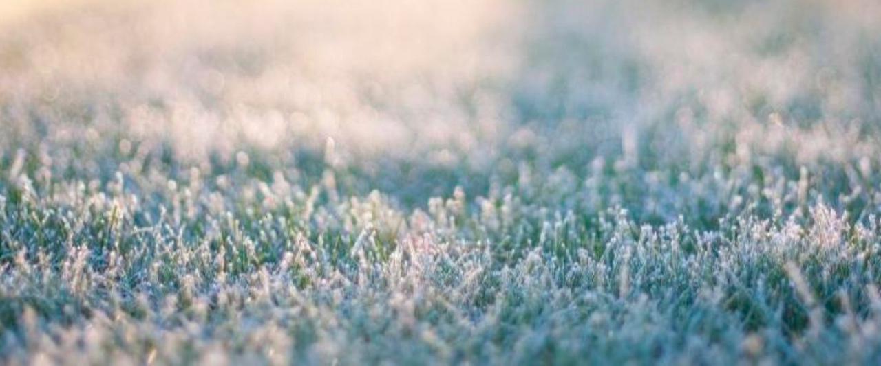 cesped-helado-consejos-para-en-desped-siempre-verde-en-invierno-tienda-online-shop