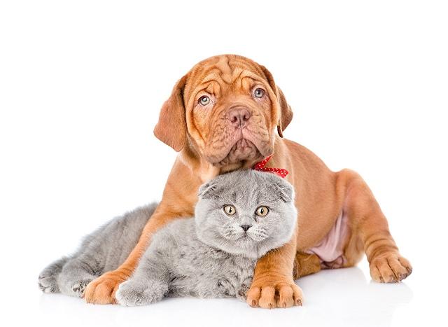 comida perros y gatos