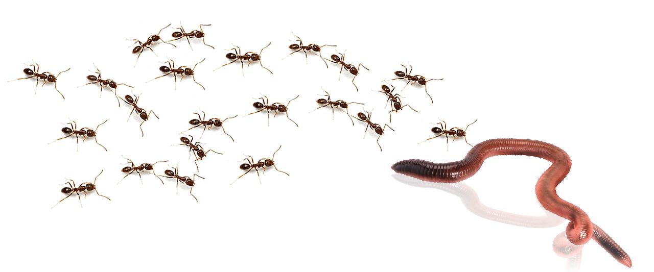 cuida-a-los-inquilinos-que-viven-en-tu-jardín-hormigas-lombriz-tienda-online-shop