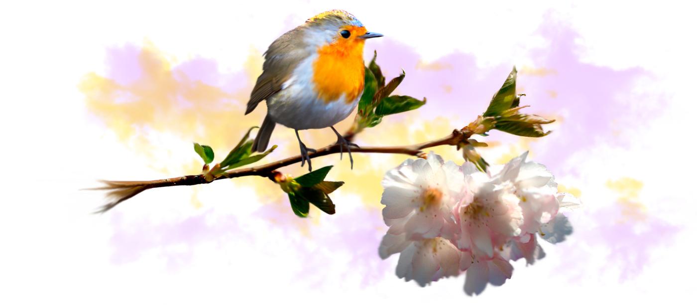 cuida-los-animales-que-viven-en-tu-jardin-pitirrojo--preparar-el-jardin-para-invierno-otono-tienda-online-shop