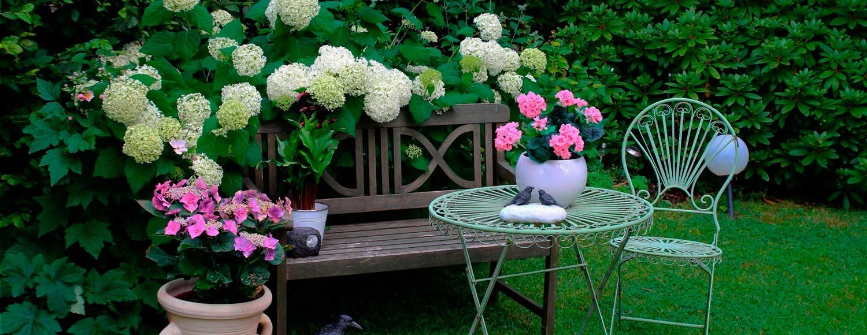 cuidados-básicos-de-cara-al-invierno-jardin-tienda-online-shop