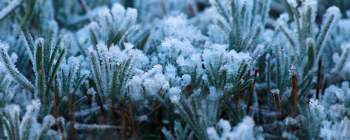 cuidados-de-las-plantas-en-invierno-tienda-online-shop-imagen-02