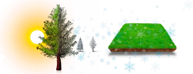 grafica-principal-cuidados-del-jardin-para-otono-y-el-invierno-online-shop
